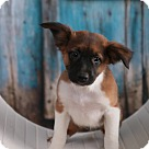 Adopt A Pet :: Prince