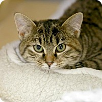 Adopt A Pet :: Cabbage Roll - Kettering, OH