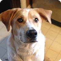 Adopt A Pet :: Charlie from Indiana - Brattleboro, VT