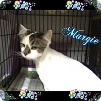 Adopt A Pet :: Margie - Buffalo, IN