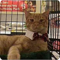 Adopt A Pet :: Magnus - The Colony, TX
