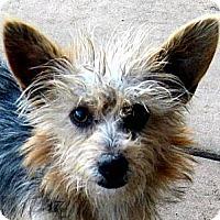 Adopt A Pet :: Aggie - Oakley, CA