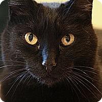 Adopt A Pet :: Nemesis - Columbia, MD