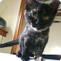 Adopt A Pet :: Pippa - Byron Center, MI