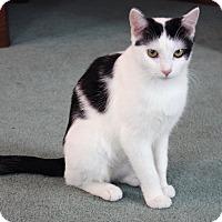 Adopt A Pet :: Heidi - Xenia, OH