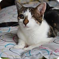 Adopt A Pet :: Yoda - Brooklyn, NY