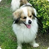 Adopt A Pet :: Max - Ortonville, MI