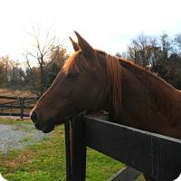 Adopt A Pet :: Chloe - Lovettsville, VA