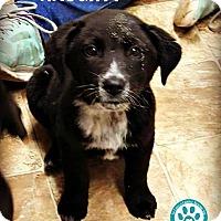 Adopt A Pet :: Naughty - Kimberton, PA