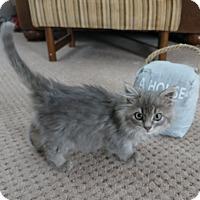 Adopt A Pet :: Megan - Geneseo, IL