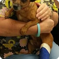 Adopt A Pet :: Kody - Rohnert Park, CA