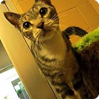 Adopt A Pet :: Lindsey - Chula Vista, CA