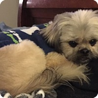 Shih Tzu Mix Dog for adoption in Hayes, Virginia - Andrew