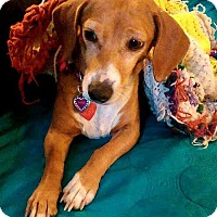 Adopt A Pet :: Daisy - Andalusia, PA