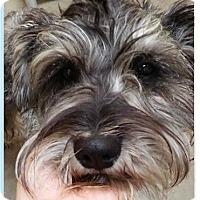 Adopt A Pet :: Fritz - Springdale, AR