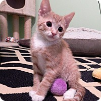 Adopt A Pet :: Dopey - Richmond, VA