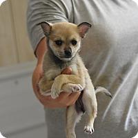 Adopt A Pet :: heather - Groton, MA