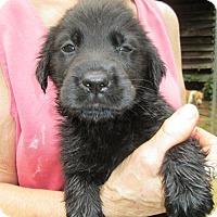 Adopt A Pet :: Pepper - Brookside, NJ
