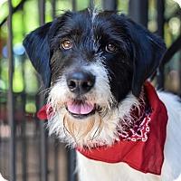 Adopt A Pet :: Parker - Baton Rouge, LA