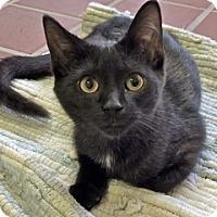 Adopt A Pet :: Guido - White Cloud, MI