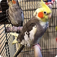 Adopt A Pet :: Spencer and Petrie - Tampa, FL