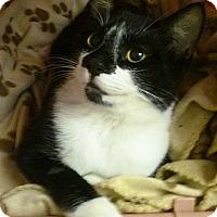 Adopt A Pet :: Rollie - Lenhartsville, PA