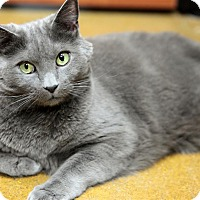 Adopt A Pet :: Rocky 2 - Fairfax Station, VA