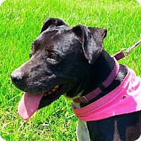 Adopt A Pet :: Eleanor - N - Huntington, NY