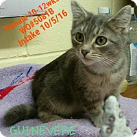 Adopt A Pet :: Guinevere - Fayetteville, WV