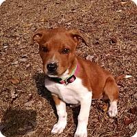Adopt A Pet :: Catie - Ellaville, GA