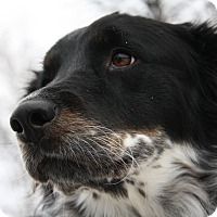Adopt A Pet :: Wilfie - King City, ON