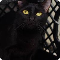Adopt A Pet :: Wren - Greenwood, SC