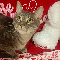 Adopt A Pet :: Alice - Arlington/Ft Worth, TX