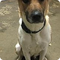 Adopt A Pet :: Pandora--in NH! - Chichester, NH
