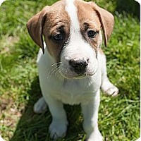 Adopt A Pet :: O'Brien - Alexandria, VA