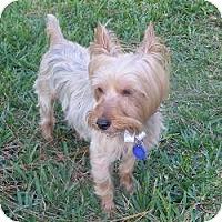 Adopt A Pet :: Mister - The Village, FL
