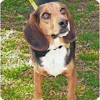 Adopt A Pet :: Heiken - Phoenix, AZ