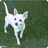 Adopt A Pet :: Skeet - Mission Viejo, CA