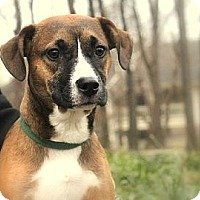 Adopt A Pet :: Winter - Reisterstown, MD