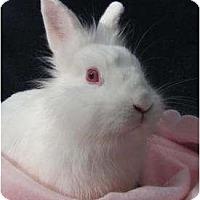 Adopt A Pet :: Sassy - Williston, FL