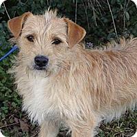 Adopt A Pet :: *Tanner - PENDING - Westport, CT