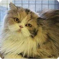 Adopt A Pet :: Louisa - The Colony, TX
