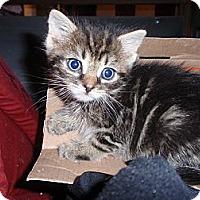 Adopt A Pet :: Short Stuff - East Brunswick, NJ