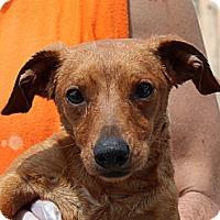 Adopt A Pet :: Ninja Norman - Staunton, VA