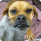 Adopt A Pet :: GingerSnap