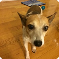 Adopt A Pet :: Terrific Torie - Madison, NJ