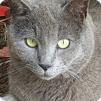 Adopt A Pet :: Maria - Wilmington, NC