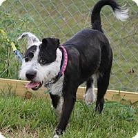 Adopt A Pet :: Shiloh - Spring, TX