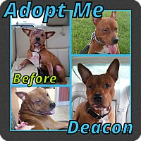 Adopt A Pet :: Deacon - Cheney, KS