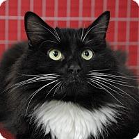 Adopt A Pet :: Gizmo - Winchendon, MA